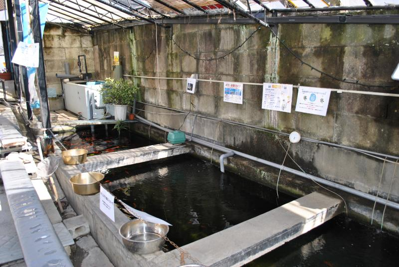 2/13 金魚坂:釣り堀