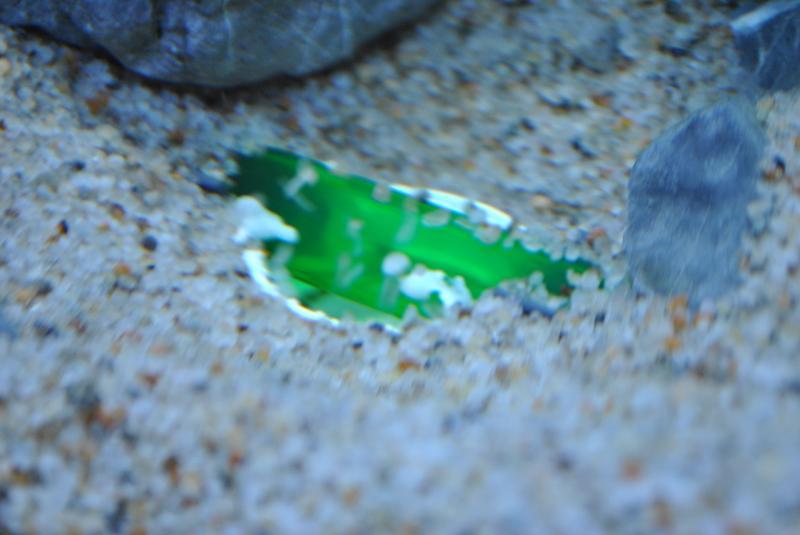 20130825 熱帯魚水槽 湧水1
