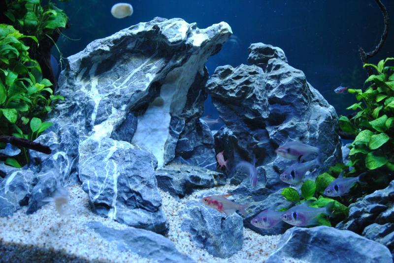 20130825 熱帯魚水槽3