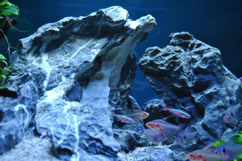 20130825 熱帯魚水槽4