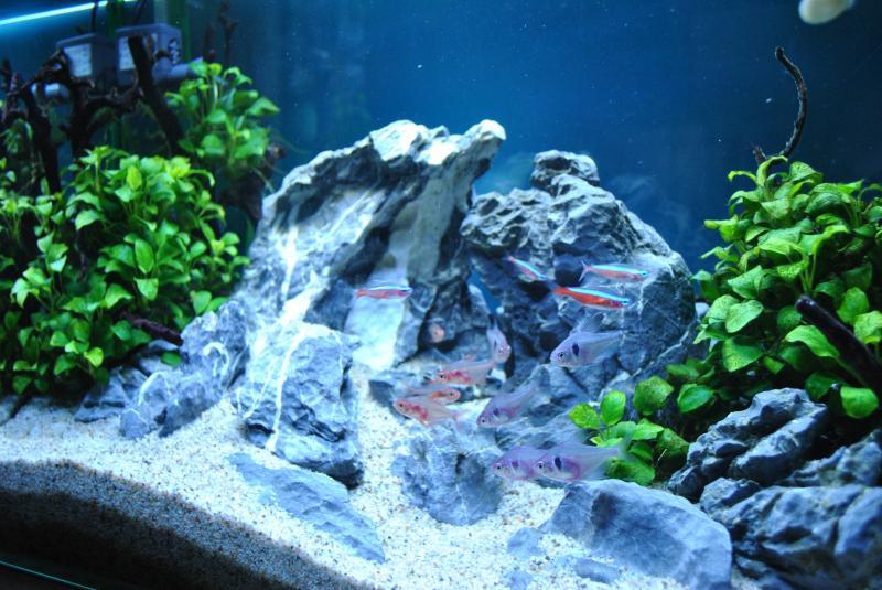 20130825 熱帯魚水槽2