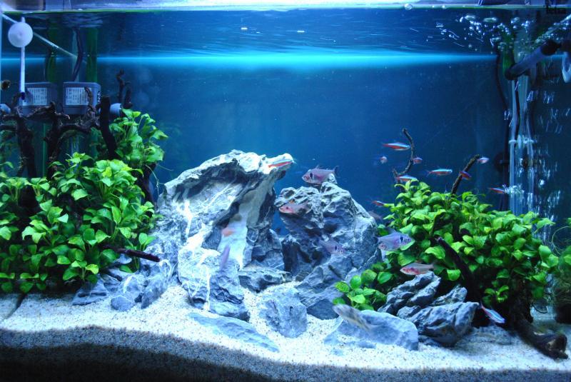 20130825 熱帯魚水槽1