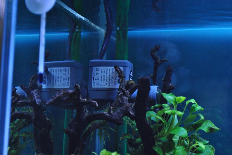 20130825 熱帯魚水槽 湧水ポンプ