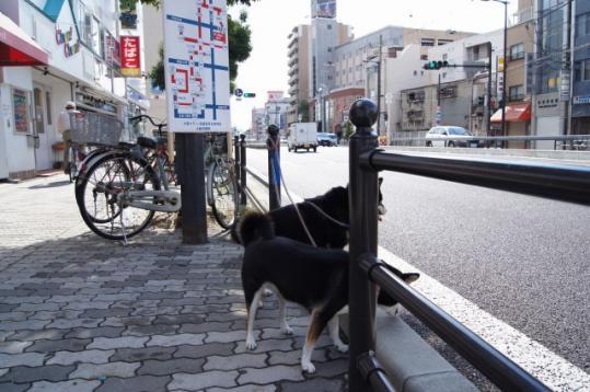 第1回大阪マラソン