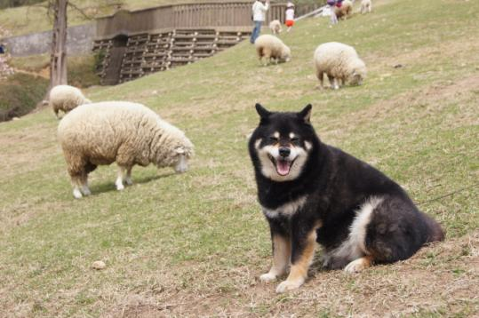 六甲山牧場