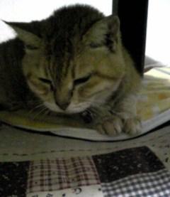 猫ちゃんホットマットで