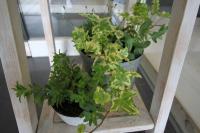 植物くん1