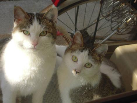 2匹の地域猫兄妹はカメラ目線をデジカメ写真撮影画像
