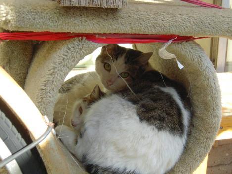 地域猫の兄妹猫はテラスのキャットタワーの中で寝てた所を起こしてデジカメ写真撮影すまない