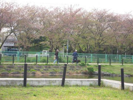 先日H25花見時期早々に静岡県東部の沼津市門池の葉桜を見ながらの花見をキャバ嬢美里ちゃんとした風景写真をデジカメ撮影