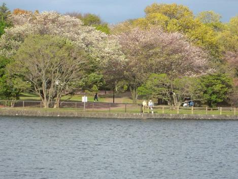 沼津市の門池周りの花見は葉桜に近かったが花見に来ていた方々も多かったと感じたデジカメ写真撮影画像