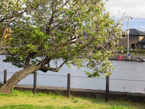 花見ができる門池にはブラックバスを釣りに来てる人も多く見えた時の風景をデジカメ撮影したぞ