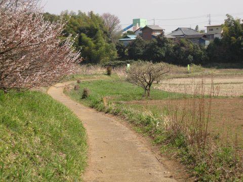 中村宿西側裏手の生活道路