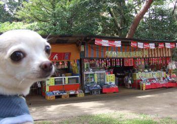つつじ公園2