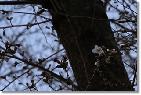 2013-03-16-03.jpg