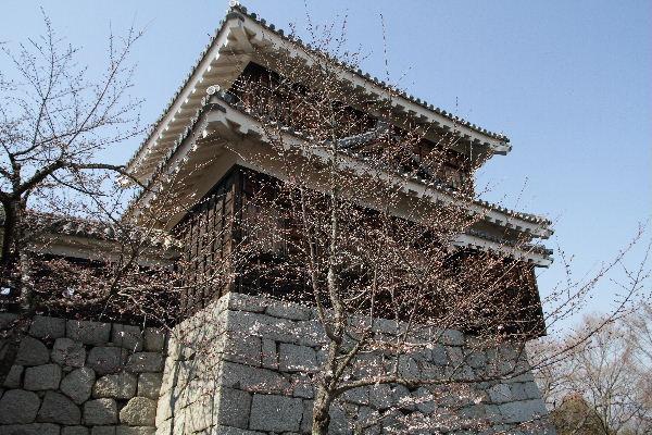 matsuyamaSakura02