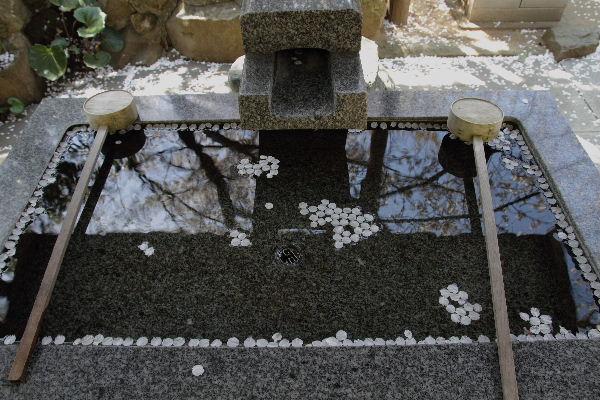 TaihouOtisakura04