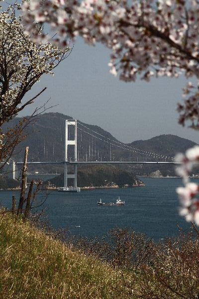OshimaSakura07