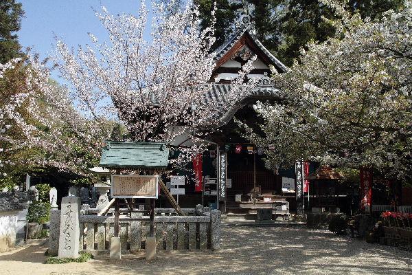 SaihojiUsu01