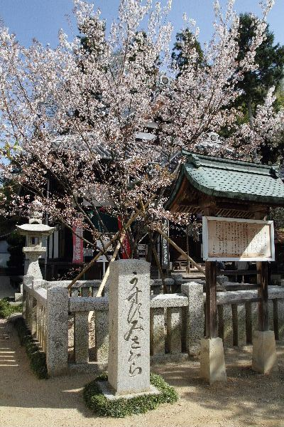 SaihojiUsu02