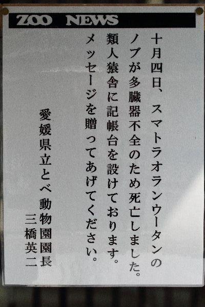 TobeZoo Nobu Death 111009 002