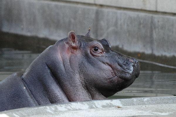 HippoYui06
