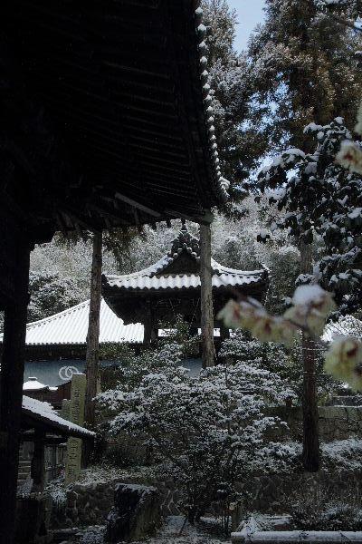浄土寺雪景色 120203 029