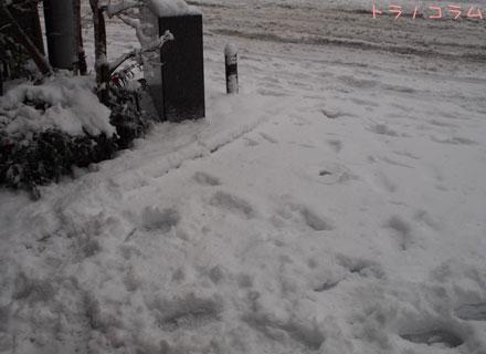 雪かきしないと凍る~
