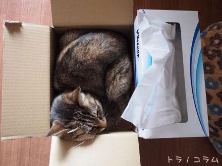 小さい箱なのニャ