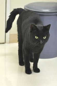 黒猫にゃん