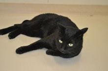 黒猫ニャン