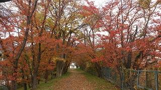 常田池周囲紅葉