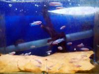 20100607/ベタ稚魚