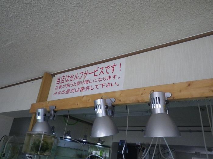 ローキーズ札幌 うけた