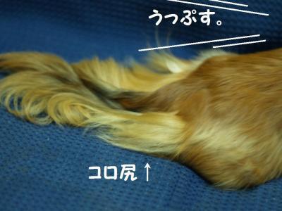 059_20100515221248.jpg