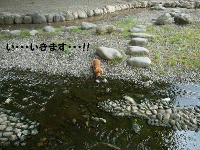 164_20100603221236.jpg