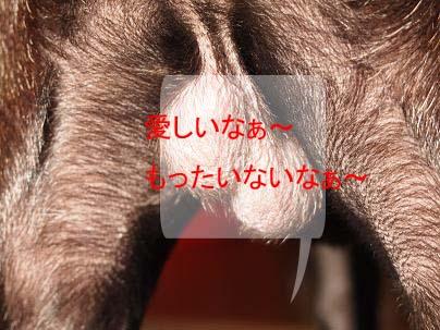 toto1103-8.jpg