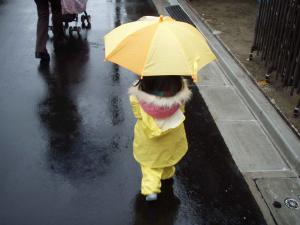 コチコ 雨1
