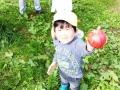 2014りんご狩り2