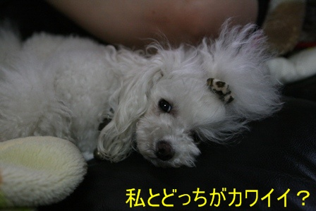 IMG_0842b.jpg