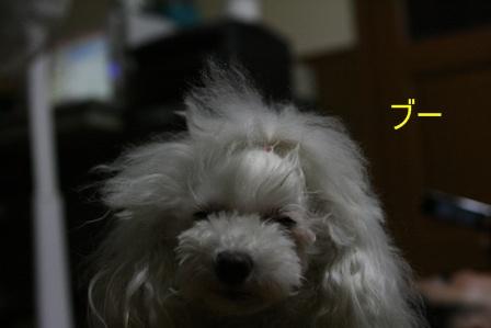 IMG_2402g.jpg