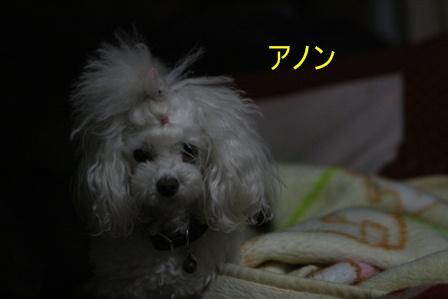 IMG_9872f.jpg
