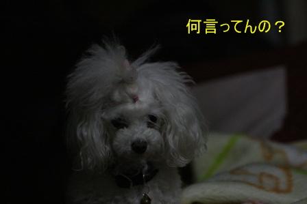 IMG_9873f.jpg