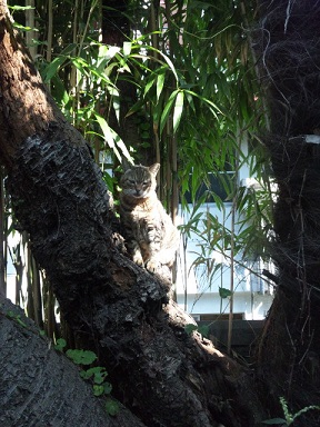 木の上でひなたぼっこ1