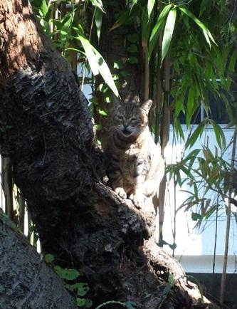 木の上でひなたぼっこ2