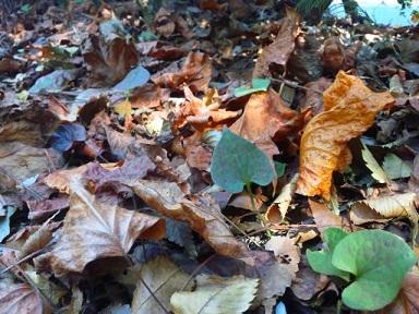 枯葉の中のハート2