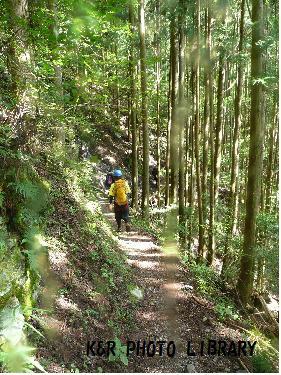 林道を下ります。
