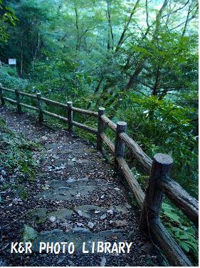滝までの道