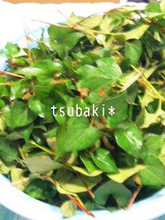 moblog_fe5b9f0b.jpg