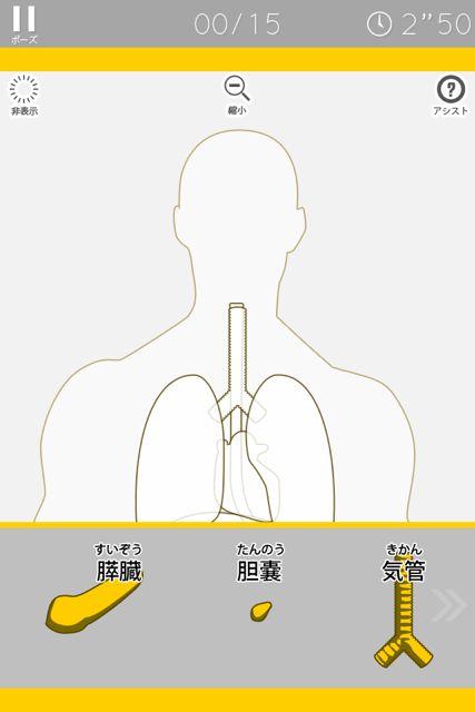 人体パズル 臓器ベーシック